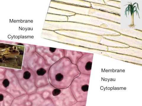 Hypertensive et gipotoniki