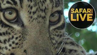 safariLIVE - Sunset Safari - July 20, 2018