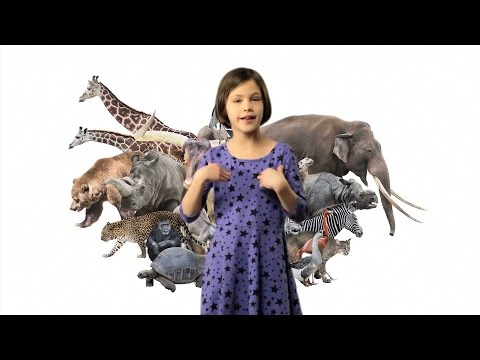 ASL Animals Song Lesson for Kids - Learn how to sign Animals with Fireese