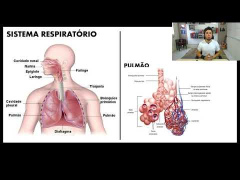 Aula 00 | Fisiologia Humana, Respiração e Excreção - Parte 02 de 03 - Biologia