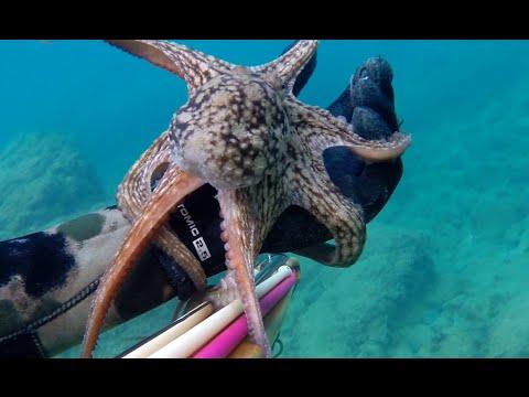 Video da pesca verticalmente