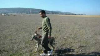 Carreras Galgos Sierra De Fuentes 2008 Parte II