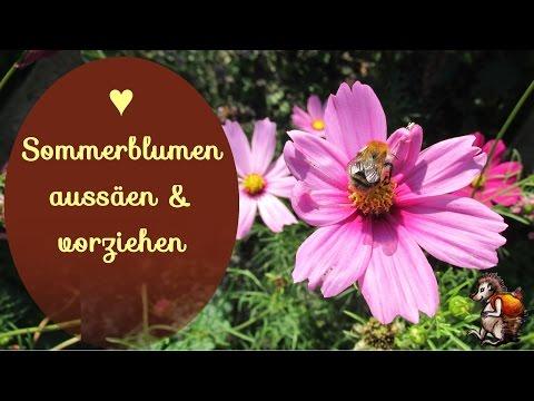Sommerblumen aussäen & vorziehen  ♥ │Blumen Garten │ Bienenweide