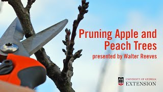 Pruning  Peaches and Apples with Walter Reeves