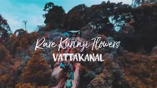 Kurinjipattu 99 Flowers In Tamil - Flowers Healthy