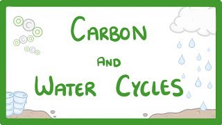 GCSE Biology - What is the Carbon Cycle? What is the Water Cycle? Cycles Explained #62
