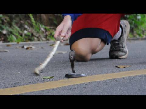 Thai TV - Thailand Video: Baby Cobra in the Street - Southern 🇹🇭 Thailand Living