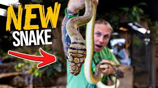GETTING THE LAST OF THE GIANT SNAKES FOR MY REPTILE ZOO!! | BRIAN BARCZYK