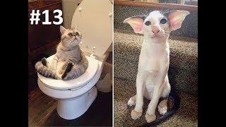 Я РЖАЛ ПОЛ ЧАСА  Смешные Коты и Собаки  ПРИКОЛЫ С ЖИВОТНЫМИ  Cute Cats #13