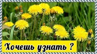 Какая весенняя зелень самая полезная для человека  | VolkoFF_video
