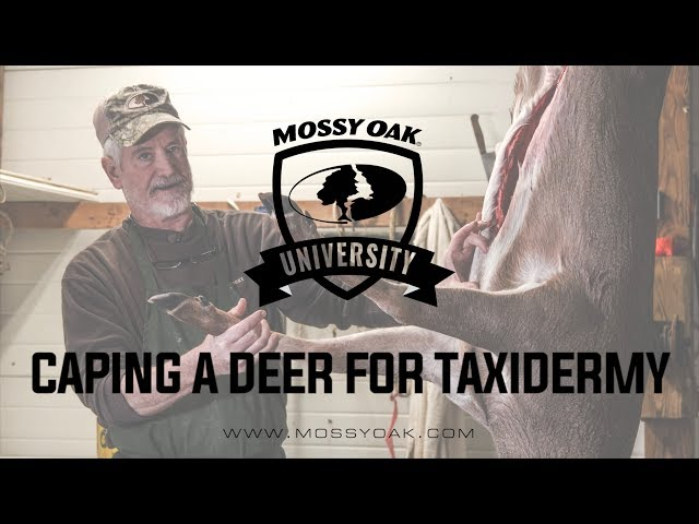 How To Cape a Buck for Taxidermy | Mossy Oak