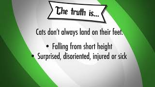 Debunked: Cats Always Land On Their Feet