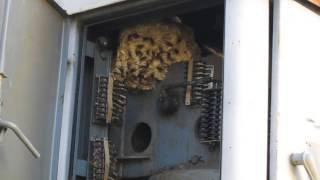 Атака на гнездо шершней