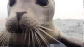Тюлень залез в лодку