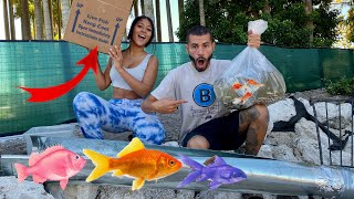 RELEASING FISH WITH DIY *ROLLER COASTER* IN HUGE POND!