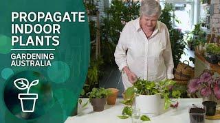 Four Simple Ways To Propagate Indoor Plants | Indoor Gardens | Gardening Australia