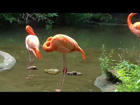 Алёна Свиридова, Розовый фламинго