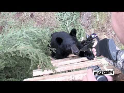 Když chce medvěd sedět na posedu vedle Vás…
