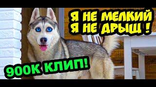 Хаски Бандит - Я НЕ МЕЛКИЙ, Я НЕ ДРЫЩ!! (Official music video) КЛИП 900К