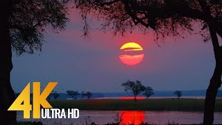 4K Wild Animals – Africa Mana Pools National Park with Nature Sounds – 4 HRS