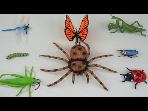 Bug Names For Kids Insects Toys Collection Learn Colors For Children