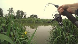 Рыбалка в лопатино на карпа о рыбалке