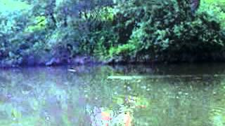preview picture of video 'Bóbr na Wiśle w Strumieniu. / Beaver on the Vistula River.'