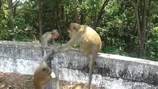 preview picture of video 'Monkey Temple in Ban Phe'