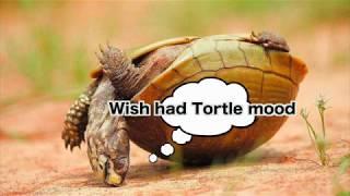 Turtle Drone | FPV (Turtle Mode) | ETHIX
