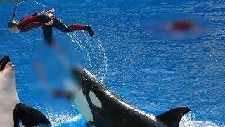 When Orcas Attack