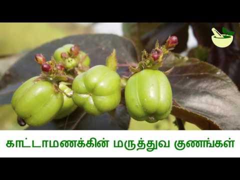 Video காட்டாமணக்கின் மருத்துவ பயன்கள் Medicinal Uses of Jatropha Gossypiifolia