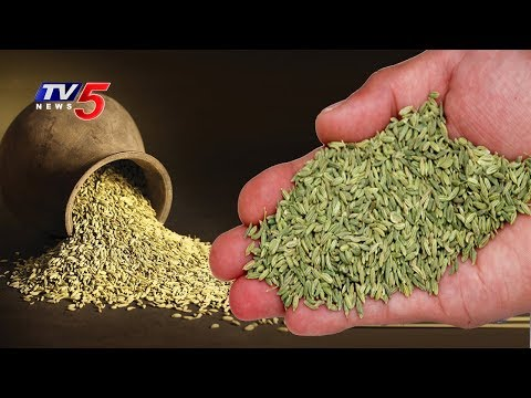 Benefits And Medicinal Uses Of Fennel Seeds ( Souff ) | Veda Vaidhyam #12 | TV5 News
