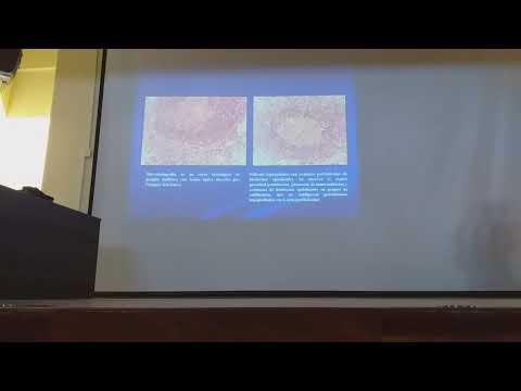 Is papilloma virus zoonotic