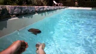 Hedgehog Rescue - seen through Google Glass