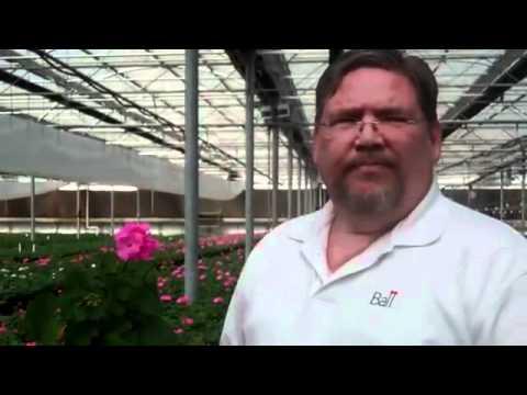 Presto Geraniums at Seville Farms thumbnail
