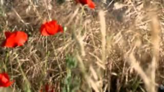 Video del alojamiento El Alcarcel