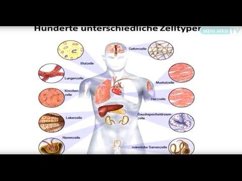 Medikamente für die Monotherapie der Hypertonie