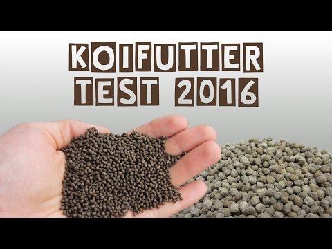 Koifuttertest 2016