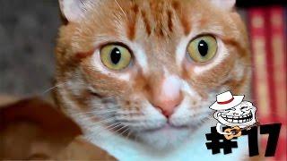 ЛУЧШИЕ ПРИКОЛЫ #17 - Кот в шоке