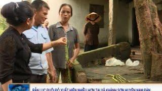 Rắn lục đuôi đỏ xuất hiện nhiều hơn tại xã Khánh Sơn - Nam Đàn