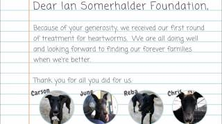 Thank you Fast Friends Greyhound Adoption for sending us this video of