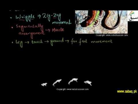 Locomotion in Amphibian
