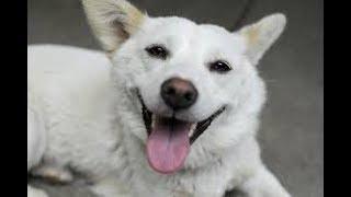 Смешные Коты и Собаки 2019 - Лучшие Приколы с Животными №106