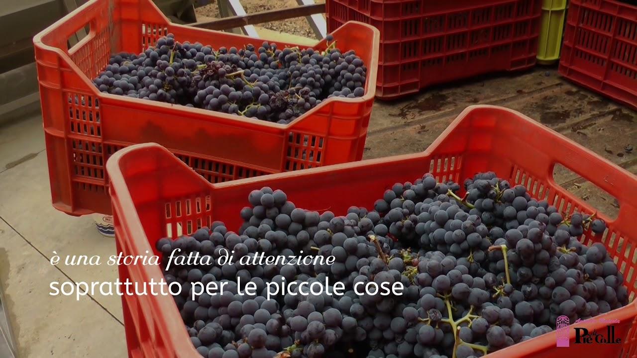 """""""Piè di Colle"""" azienda vinicola - vini toscani Chianti DOCG e IGP 11"""