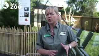 Learn About Our Giant Pandas!