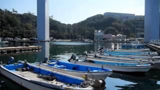「アジ釣って食べる」徳島県亀浦港釣り