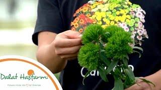 [Flowers TV] Green Wicky Màu Xanh Mê Hoặc, Quyến Rũ Hàng Triệu Con Tim