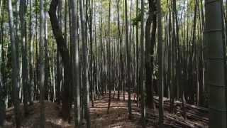 森林浴・・・Forestbathing