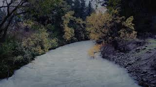 RAIN Sounds and RIVER Sounds 8 HOURS, Reduce Stress with Sound of River and Rain to Sleep, Study