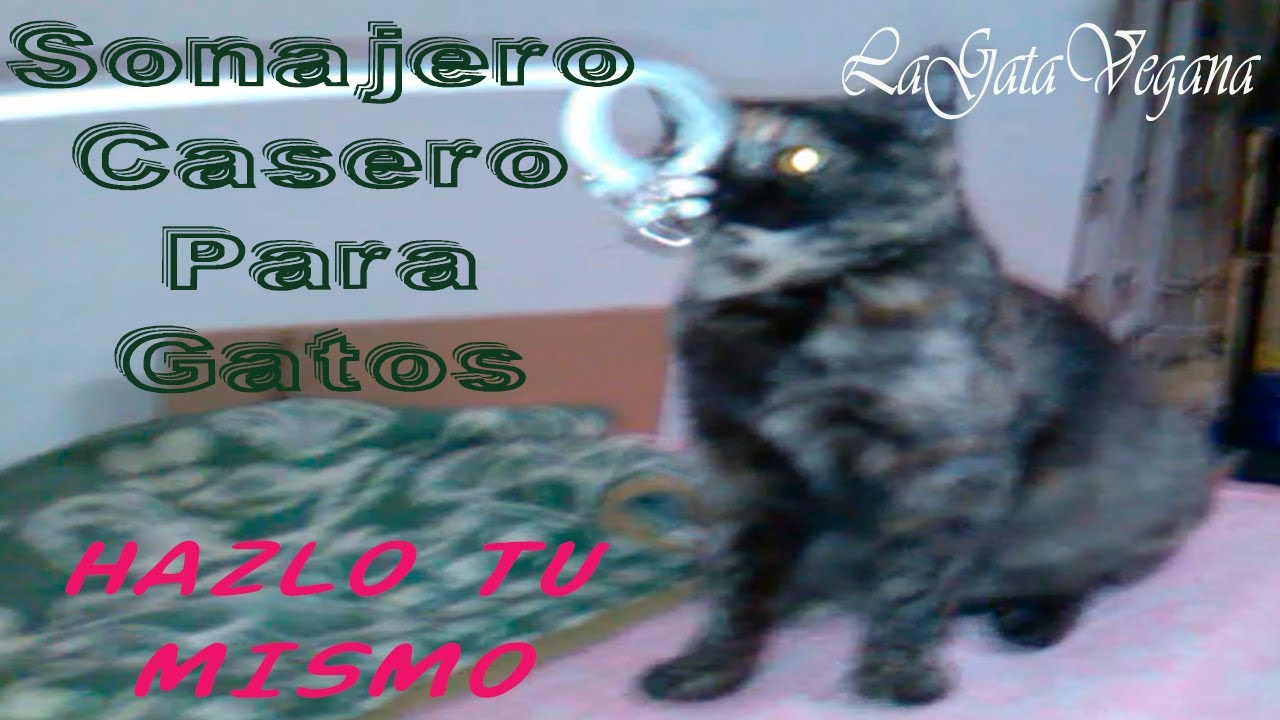 SONAJERO CASERO PARA GATOS /HAZLO TU MISMO / JUGUETE CASERO ,BARATO Y FÁCIL PARA ENTRETENER GATOS